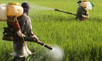 Suspension of licenses issued in respect of certain pesticides